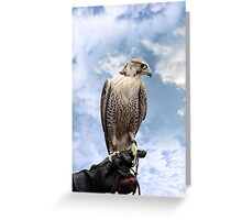 falcon perched on leather glove Greeting Card
