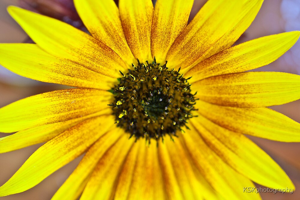 Sunflower yellow by KSKphotography