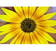 Sunflower yellow Photographic Print