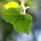 Shades of Green by TriciaDanby