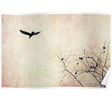 Raven hued secrets Poster