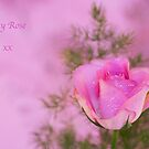Pretty in Pink by Elaine123