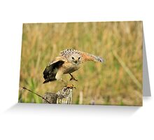 Red Shoulder Hawk Taking Flight Greeting Card