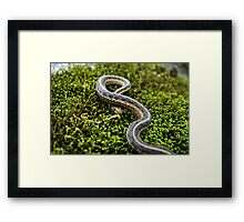 Sunny Scales Framed Print