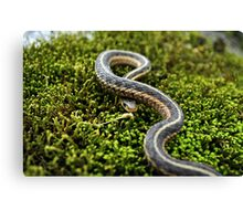 Sunny Scales Canvas Print