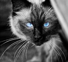 Ol Blue Eyes by Yanni