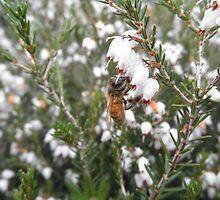 Honeybee On Flower by ack1128