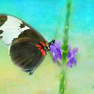 Butterfly on a Flower by Anita Pollak