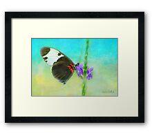Butterfly on a Flower Framed Print