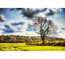 Spring Field Photographic Print