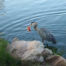 Blue Heron and Goldfish by Gordon Pegler