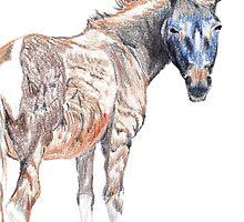 Donkey 4  by Henry2012