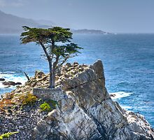 Lonely Cypress by Agro Films