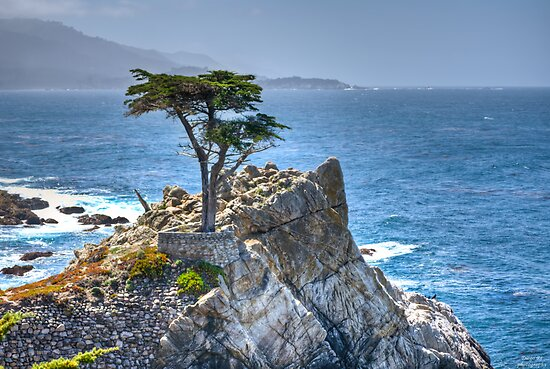 Lonely Cypress by Diego Re