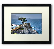 Lonely Cypress Framed Print