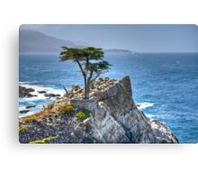 Lonely Cypress Canvas Print