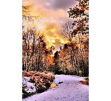 woodland Wonder Photographic Print