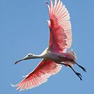 Roseate Spoonbill by Janet Fikar