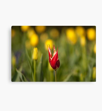 Standing Out from the Crowd Canvas Print