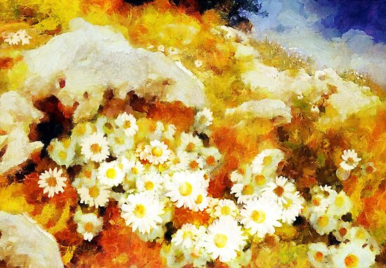 Daisies on the mountain&#x27;... by Valerie Anne Kelly