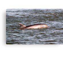 Dolphin Eye Canvas Print