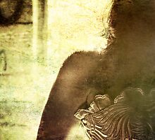 sustained by her blanket of grief by Tania Palermo