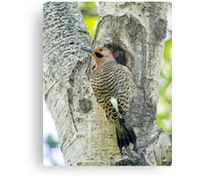 At the nest  Metal Print