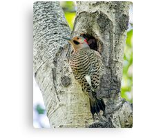 At the nest  Canvas Print