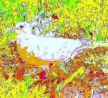 Dove in bright light by ♥⊱ B. Randi Bailey