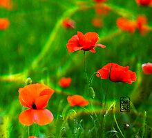 poppies by Sonia de Macedo-Stewart