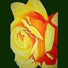 Yellow Rose with Green iPhone Case by lexih007