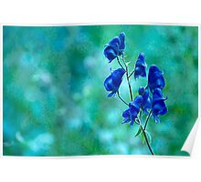 Monkshood Poster