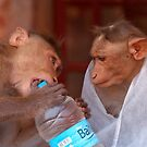 Cheeky Monkeys Opening Stolen Water Hampi by SerenaB