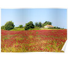 A field of common sainfoin (Onobrychis viciifolia) Photographed in Tuscany, Italy  Poster