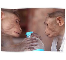 Cheeky Monkeys Opening Stolen Water Hampi Poster