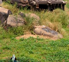 Field Worker and Temple Hampi by SerenaB