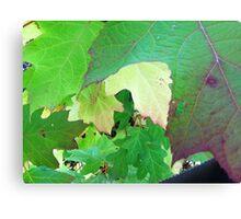 Leaf overlap Canvas Print