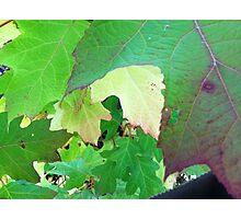 Leaf overlap Photographic Print