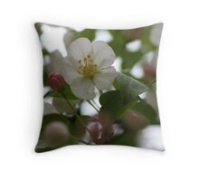 Sheer Colour Throw Pillow