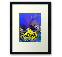 Pansy bright Framed Print