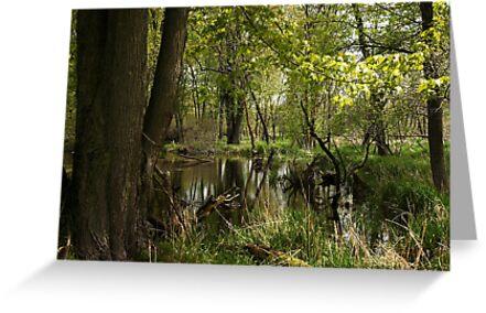 White River Landscape 6748 by Thomas Murphy