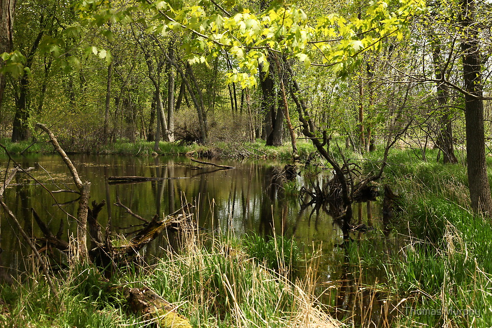 White River Landscape 6749 by Thomas Murphy