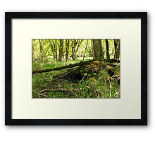 White River Marsh Landscape 6782 Framed Print