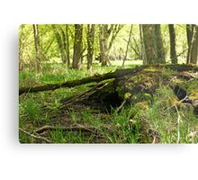 White River Marsh Landscape 6782 Metal Print