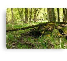 White River Marsh Landscape 6782 Canvas Print