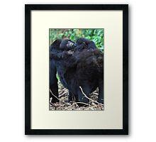 Mother & Baby Mountain Gorilla, Kwitonda Group, Rwanda Framed Print