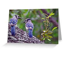 Blue Jays Greeting Card