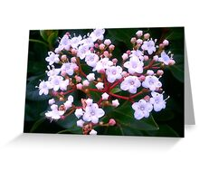 Pink and White Korean Spice Flowers Greeting Card
