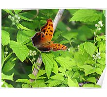 Eastern Comma Poster