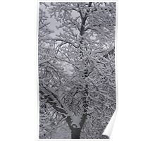 A Tree in Winter. Poster